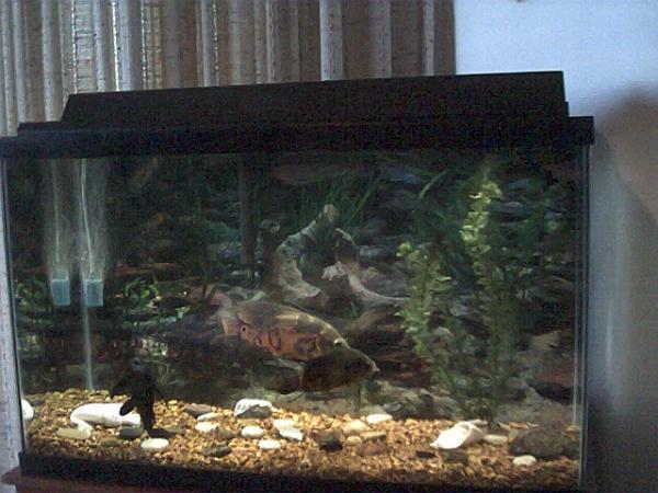 Oscar Tank