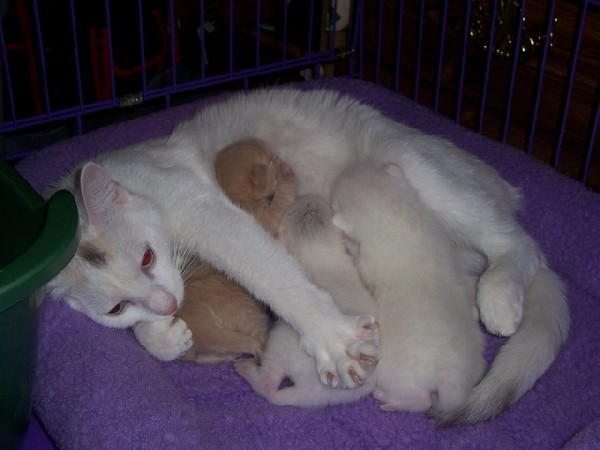 Silk and her little ones