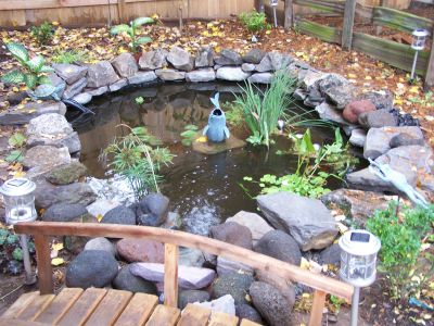 My first pond