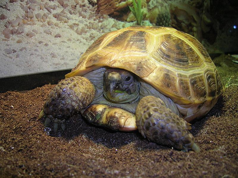 К Чему Снится Покупка Черепахи